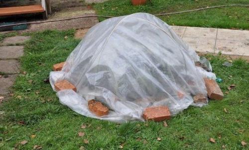 Уход за гортензией осенью подготовка к зиме. Как укрыть гортензию на зиму?