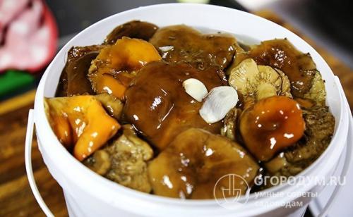 Рассол для грибов рецепт. Наиболее популярные рецепты соления грибов