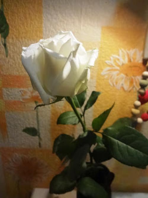 Как розу покрасить в синий цвет. Как я красила розу- эксперимент