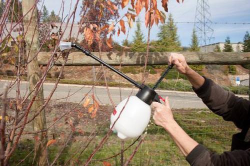 Обработка осенью мочевиной деревья. Необходимость осенней обработки