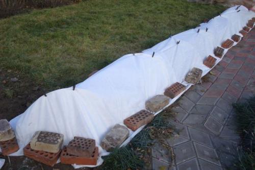 Как сшить укрытие для роз на зиму своими руками. Зачем нужно укрывать кусты на зиму