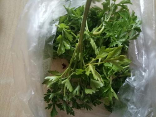 Как сохранить петрушку в свежем виде на зиму. Как хранить зимой в домашних условиях? 04