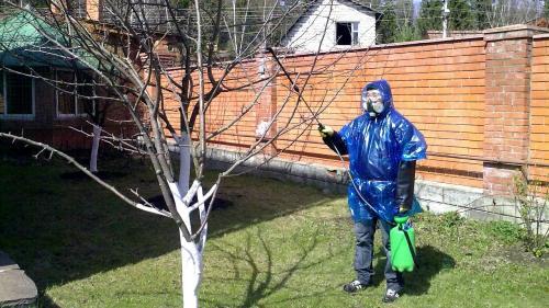 Чем обработать деревья осенью от вредителей и парши.