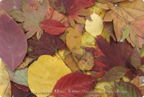 Цвет осенних листьев палитра. Палитра осени – цвета и оттенки Приморской осени.