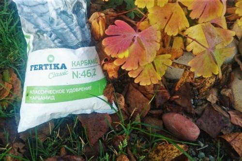 Осенняя обработка плодовых деревьев мочевиной. Осенняя обработка сада мочевиной. Дешево, доступно, эффективно