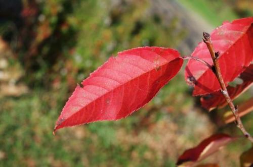 Химическая обработка сада осенью. Обработка сада осенью от болезней и вредителей: полезные советы для дачников