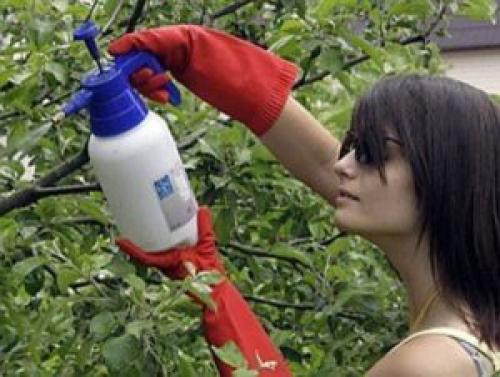 Чем обработать яблоню от парши летом. Весенняя обработка