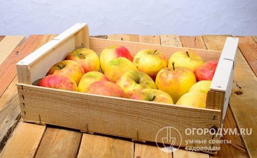Яблоки Хранить. Способы хранения яблок в квартире
