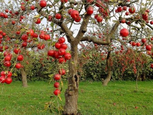 Как утеплять на зиму деревья. Утепление плодовых деревьев на зиму