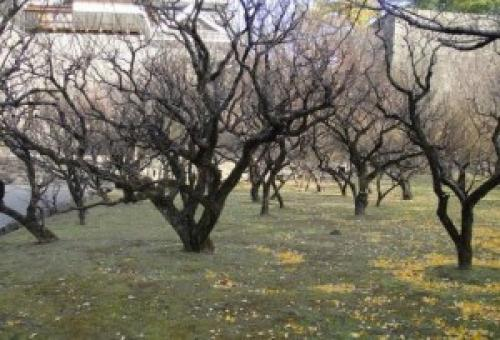 Обработка сада мочевиной и железным купоросом. Осенняя обработка сада железным купоросом и мочевиной