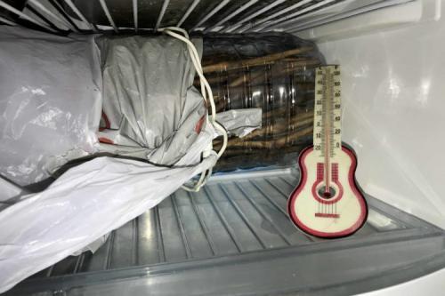 Как хранить чубуки винограда зимой. Хранение черенков винограда зимой в холодильнике