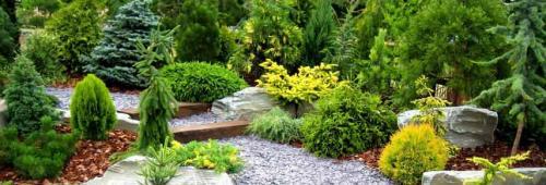 Как правильно посадить сосну из леса осенью. Подходящее время 04