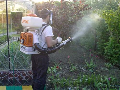 Осенняя обработка деревьев от вредителей и болезней. Когда и зачем проводить искореняющую обработку сада осенью