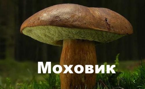 Польский гриб отличие от белого