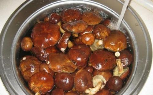 Польский гриб как готовить на зиму
