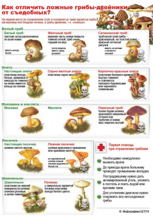 Как отличить съедобные грибы от несъедобных. Как отличить ядовитый гриб - Как отличить съедобные грибы