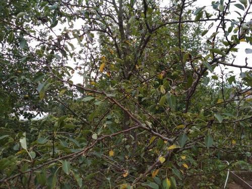 Железный купорос осенью. Нужно ли и зачем обрабатывать сад осенью купоросом (железным или медным)