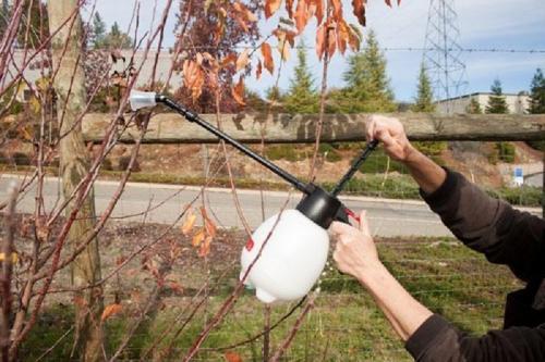 Можно ли смешивать железный купорос и мочевину. Препараты для опрыскивания плодовых деревьев