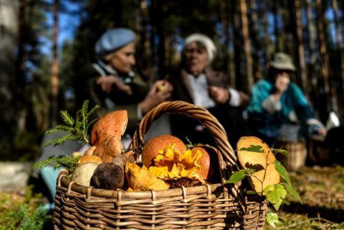 Какие съедобные грибы растут в белоруссии. Грибы Беларуси: съедобные, ядовитые и весенние виды