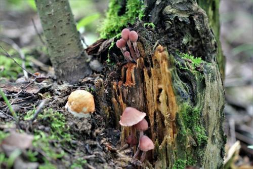Как быстро вырастают грибы. Дневник грибника.Скорость роста грибов.