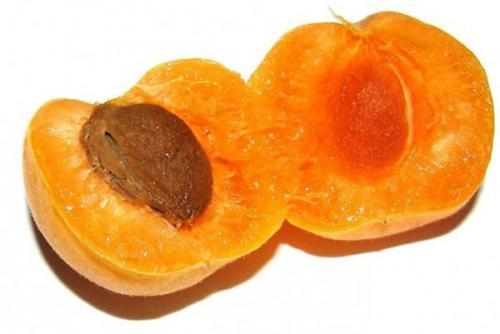 Как вырастить абрикос в беларуси из косточки. Выращивание абрикоса из косточки