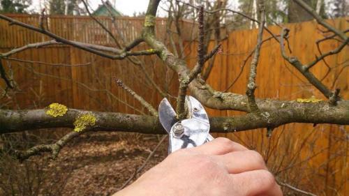 Опрыскивание мочевиной деревьев осенью. Свойства мочевины