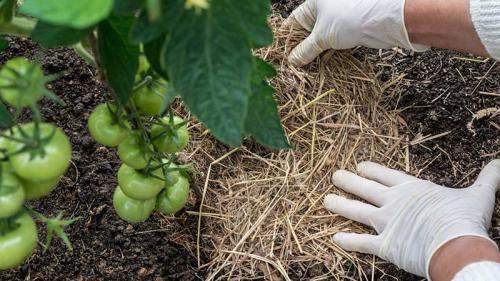 Материал для мульчирования почвы от сорняков. Мульчирование от А до Я