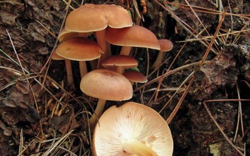 Луговые ядовитые грибы. Рейтинг ядовитых грибов России. Грибникам на заметку