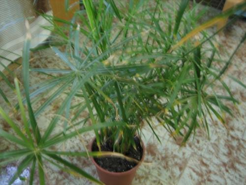 Паспорт комнатного растения фикус. Паспорт комнатных растений в детском саду 07