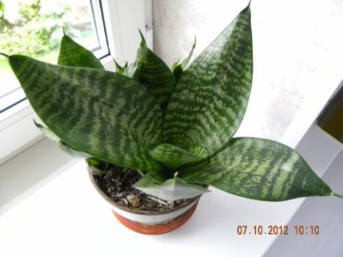 Паспорт комнатного растения фикус. Паспорт комнатных растений в детском саду 12