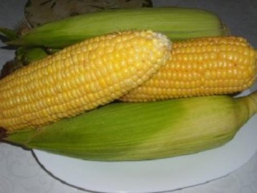 Как консервировать в домашних условиях кукурузу в початках. Кукуруза на зиму без стерилизации