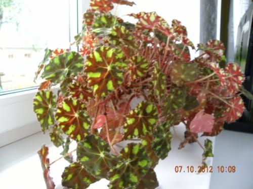 Паспорт комнатного растения фикус. Паспорт комнатных растений в детском саду 06