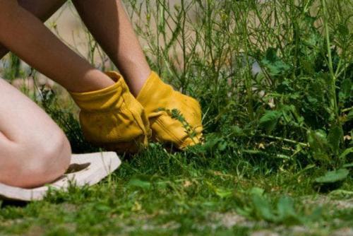 Как избавиться от травы на поле картофельном. Как убрать с участка, огорода