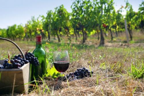 Сок из винограда молдова. Поговорим об ошибках в приготовлении вина
