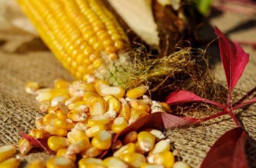 Консервированная кукуруза в початках в домашних условиях рецепт. Кукуруза на зиму в домашних условиях