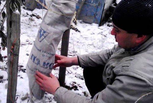 Как утеплить саженцы деревьев на зиму. Необходимые материалы