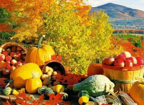 Как убрать огород осенью. Готовим огород к зиме