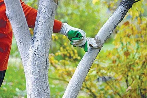 Осенняя уборка на даче, что делать в первую очередь. Работы в саду осенью