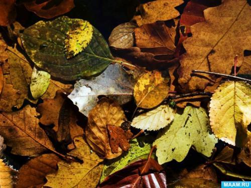 Осенняя уборка на даче, что делать в первую очередь. Работы в саду осенью 05