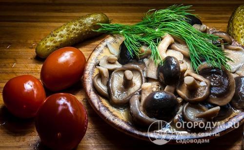 Грибы рецепты консервация. Стандартный рецепт для пластинчатых грибов