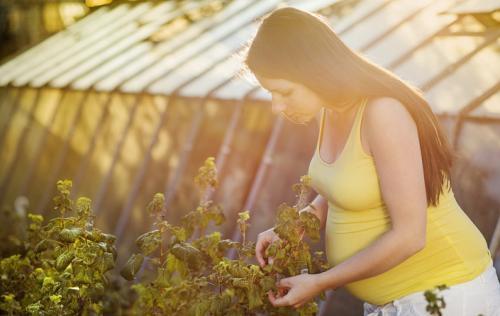 Виноград Тайфи полезные свойства. Виноград при беременности