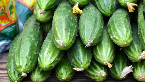 Как долго хранить огурцы свежими. Как хранить свежие огурцы в холодильнике максимально долго: лучшие способы и полезные советы
