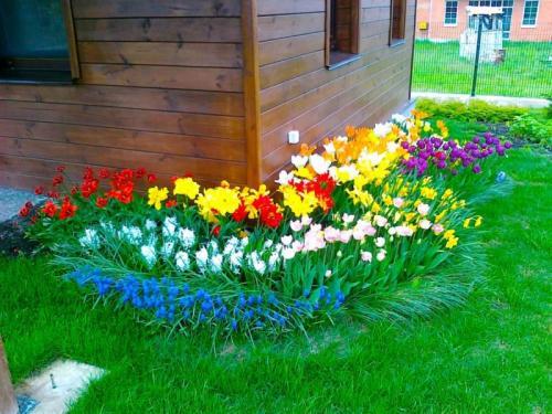 Цветы для ленивых на даче. Чудесные цветы для «ленивого» и красивого цветника на даче