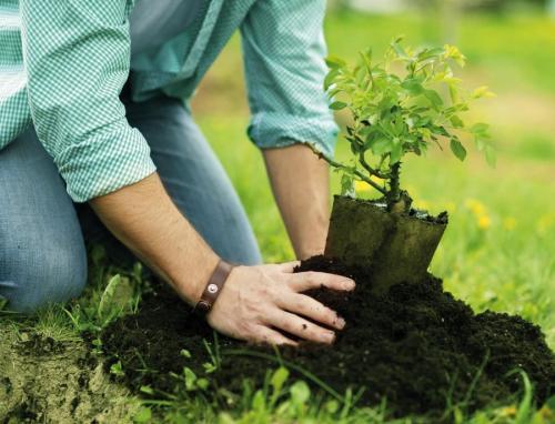 Когда осенью высаживать саженцы плодовых деревьев. Посадка и пересадка деревьев осенью: рекомендации опытных садоводов