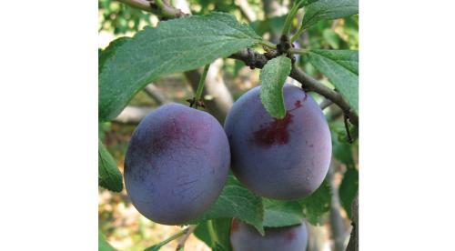 Природное земледелие на садовом участке практика. Природное земледелие на практике. 07